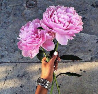 229288-light-pink-peonies
